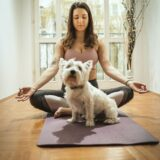 How to become a Certified Usui Animal Reiki Master